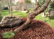 Corteza de pino en bruto.  servicios integrales