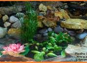 Jardines magicos naturales