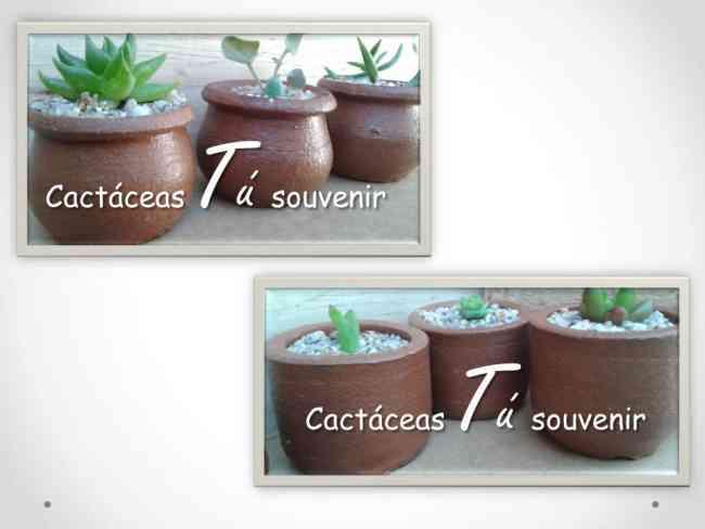 Cactus y suculentas recuerdos todo evento
