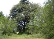 Bellas parcelas entorno natural pocos minutos de villarrica