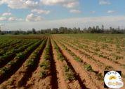 Oferta por traslado agrícola región del maule 51 has.consultar!