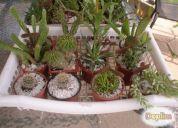 Vendo cactus - suculentas $1.000