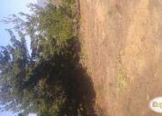 Vendo terrenos en laguna verde