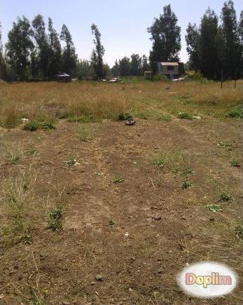 Vendo Terreno de 4000 mts2 con casas de 42 mts2, urbanizada