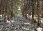 Excelente fundo forestado los copihues 30 ha purranque