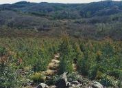 """Excelente campo forestal de 179 hÁs, sector """"los barros"""".nacimiento"""