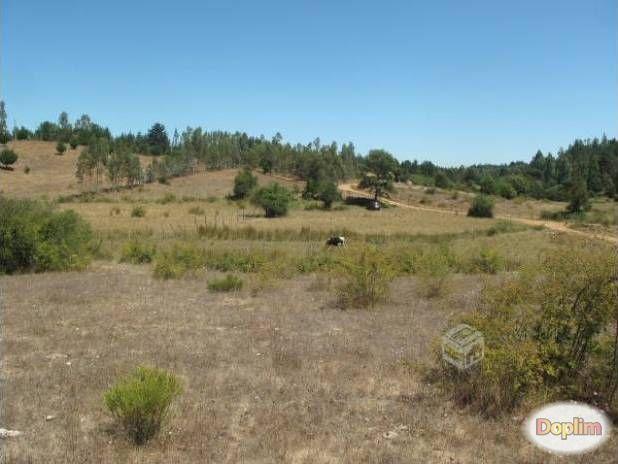 Vendo Terreno agricola ó forestal en san nicolas-ninhue