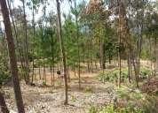 Excelente terrenos en laguna verde.