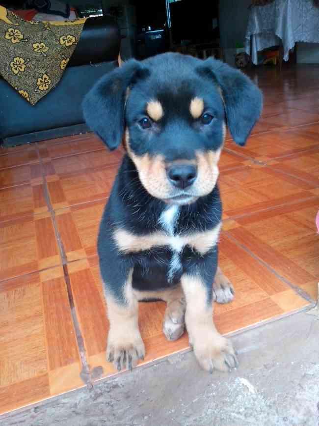 se vende hermosa cachorrita de 2 meses en $250.000