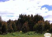 Excelente parcela frente a ruta 5 sur, paillaco, valdivia