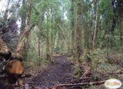 Excelente terreno en tehuaco 32 hectáreas