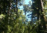 excelente parcela con bosque, agua, luz entre lago y termas. contactarse!