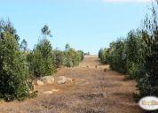 Arriendo excelente hectáreas industriales san antonio.