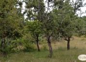 Oportunidad unica campo 80 hectáreas en fresia