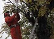 Poda y tala de árboles con motosierra