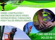 Servicios de poda y tala de Árboles en altura