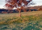 Hermosas parcelas pircas de bellavista