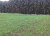 Se vende 17 hectareas Llanquihue