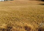 Excelente campo de 10 hectáreas los muermos