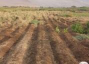 Venta terreno 12 hectáreas Valle Lluta, Arica
