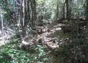Vendo parcela en coñaripe con bosque nativo parajes hermosos