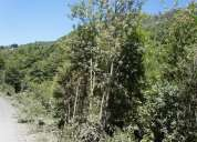 Vendo parcela en coñaripe, orilla de camino, no indigena