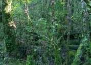 Vendo hermosa parcela con vista al valle de 1 ha, coñaripe, camino termas
