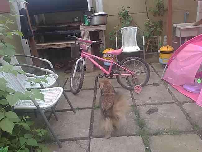 Vendo bicicleta aro 20para niñita está nueva se va en 40.000