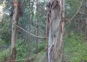 Vendo campo forestado llegar y explotar