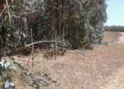 Oportunidad terrenos campiche rabanal