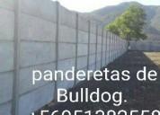 Panderetas de bulldog +56951382558