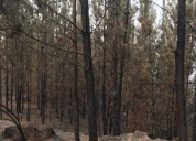 Excelente terreno con bosque quemado.