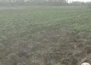 Tengo 11 hectáreas a la venta en chillan