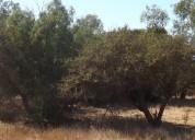 Vendo terrenos en papudo cerca de balneario
