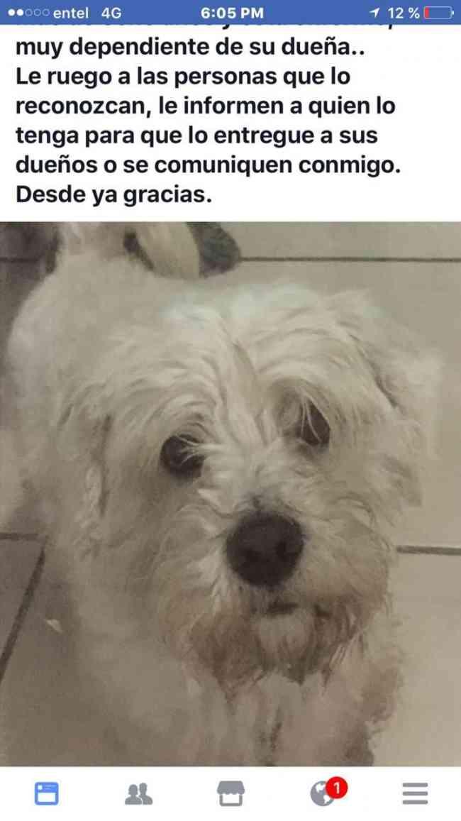 Se busca perrito perdido