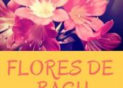 Curso de flores de bach en san miguel