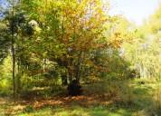 Privilegiadas parcelas en hermosos entorno natural