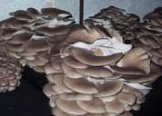 Curso técnicas cultivo de champiñon ostra