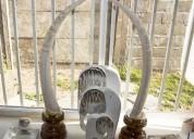 Colmillos de elefante