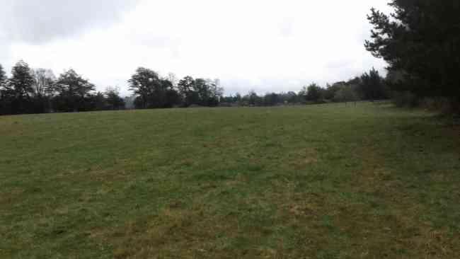 Se arrienda terreno 50 hectáreas.