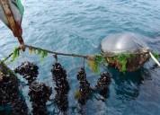 Negocio de mariscos ( cultivo )