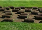 Pasto alfombra verde todo el año x m2