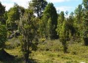 Excelente parcela 5.000m2 en bosques de puerto