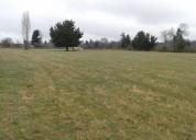 Se arrienda terreno de 50 hectáreas. ( o medianero)