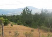 Oportunidad!. se vende 37 hectáreas forestal ninhue