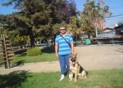 Adiestramiento canino domicilio