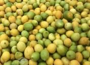 Vendo limones en bins por mayor