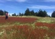 Hermoso terreno ritoque gran plusvalia 1100 m2, contactarse.