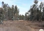 Parcelas 100 planas campo real de litueche 5000 m2, consultar precio.