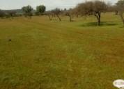 Excelente campo real 5000 m2  en cardenal caro